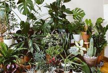 PLANTS / Nature's friends