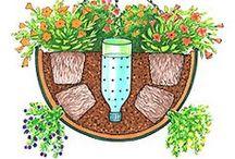 Edible Garden / Grow your own herbs and vegetables!
