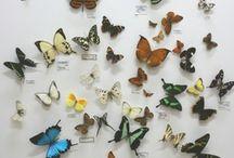 Science {life - animals & plants}