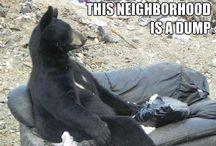LOL Animals