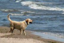 Cape Cod pets