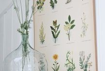 Culinary Herbs / Delicious cooking herbs and  botanical art
