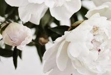 ~ in bloom ~