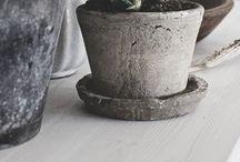 ~ plants ~