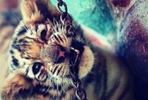 my animals <3
