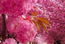Luonnon kauneutta
