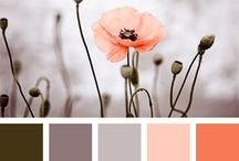 ~ colors ~