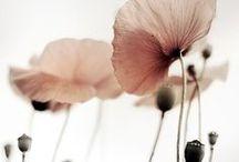 pick ✺ flowers