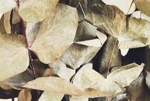 pick ✺ leaves