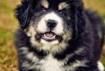 DoggieBoard