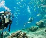 Under the Sea / The best diving and snorkeling spots around the world!