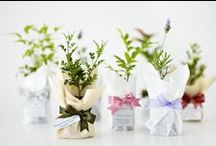 Recuerdos de boda :: Wedding favours