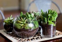 Terrariums and Gardening