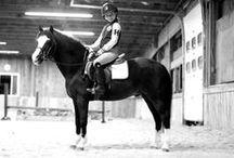 Horses in General