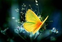 Butterflies / Butterflies symbolizes growth, change, emergence, and transformation.