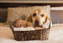 Newborn & Infant Photography / Newborn and Infant photography by Nallayer Studios