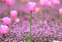 FLORES e ARRANJOS / As flores de amanhã nascem com a semente de hoje.