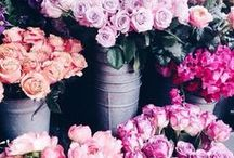 Blumen ❁✿❁ Flowers