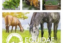 Equidae / We will provide our clients with a complete Horse Care Product range that contains 100% Natural ingredients, that are effective, safe and affordable!