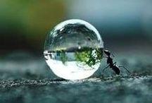 昆虫 Insect