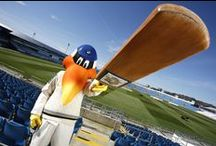 SPORTS MASCOTS: Cricket / Sports Mascots manufactured by Rainbow Productions for Cricket Clubs.