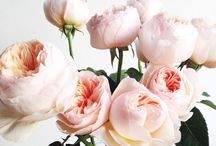 FRESH FLOWERS / Beautiful blooms, bouquets, flower arrangements, and inspiration for bringing the outside in.