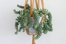 PLANTS / Plants, cacti, leafy greens -- all the ways to add a bit of green to your life.