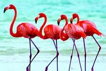 Flamingo's / Flamingo's