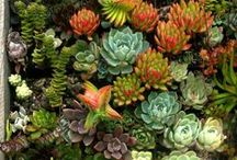I love plants. / This is a large collection of design ideas and things that inspire me to design with living plants -- some of my projects are in this board too.   / by Veronica Van Gogh