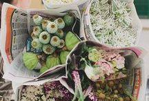 bloom / by maddy landis-croft