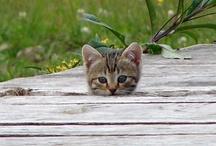 Kittys!  / by Jenna Mullinax