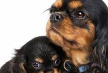 Hunder ❤️