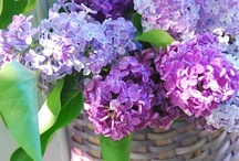 Lilacs / by Colleen Jorundson