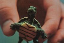 Baby Animals :') / by Jenna Mullinax