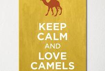 camel love!