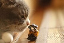 【meow meow】 / by Wendie Hsu