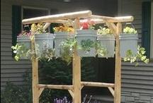Gardening Food & Herbs  / by Julia