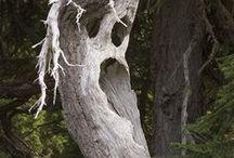Freaky Trees.