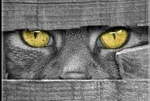CATacular