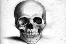 Skeleton, skulls and other bones...