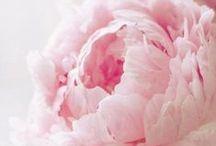 PETALS / flowers & petals