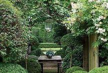 The Garden / garden