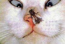 Don't laugh / Stupid animals