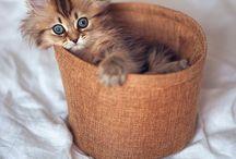 So cute / Cute stuff I love