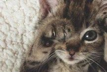 Kittens / Aren't this kitty's to cute