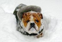 Outdoor Pet Safety / Tips and Tricks for keeping your pets safe in the winter cold and summer heat!