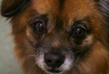 Adoptable Dogs / Highlighting rescues & shelters adoptable dogs