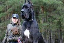 Really big, big dogs / Really big, big dogs