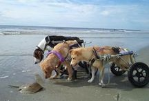 Overcoming the Odds / Dogs overcoming the odds
