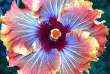 Flower Power / Unusual flowers